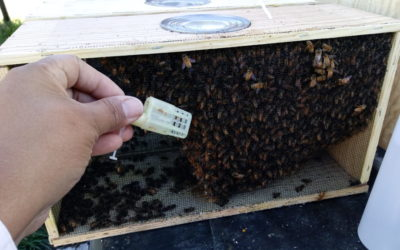 2018 Queen & Bee Availability