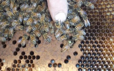 In Her Majesty's Chambers: Intro to Queen Breeding workshop March 11, 2018 in CA.